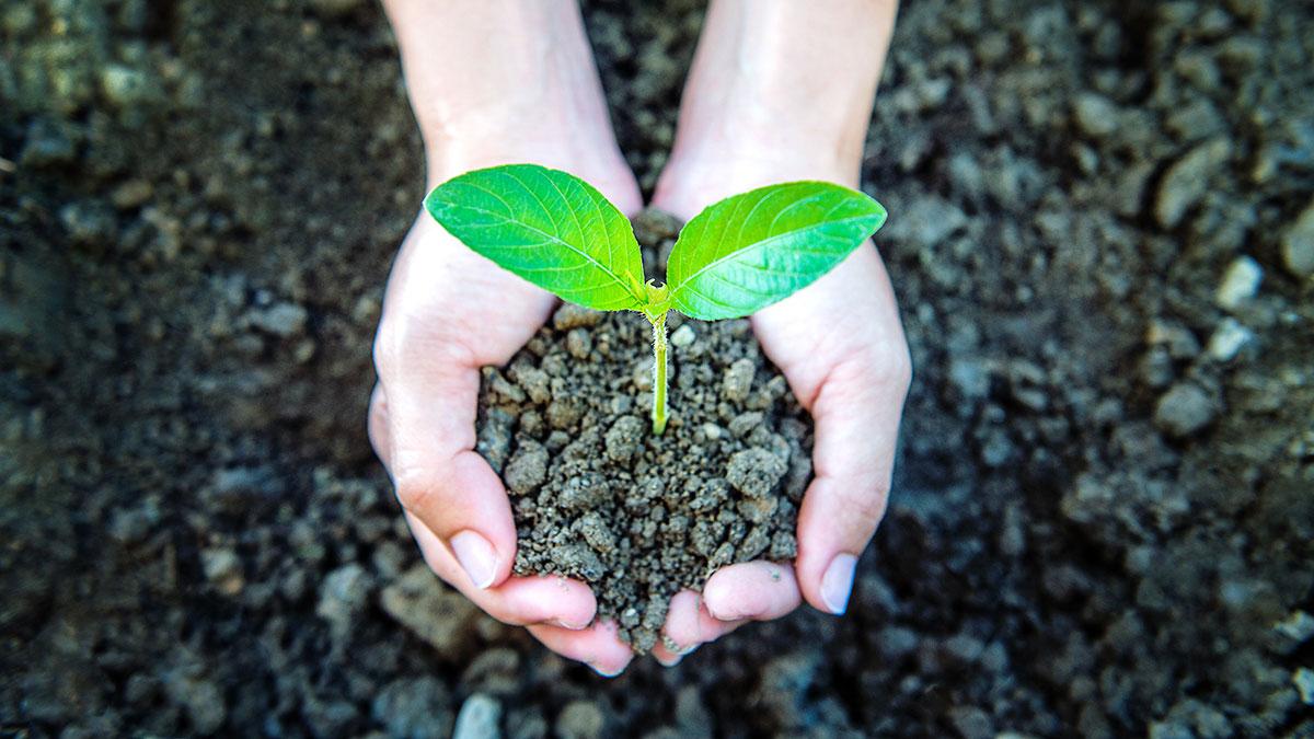 Avanza la Ley de Educación Ambiental Integral - Qi Argentina